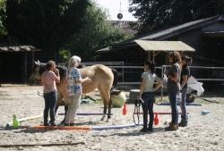 Coaching mit Pferden: Ein Traumberuf