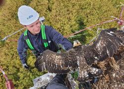 E.DIS: Artenschutz für Vögel in Brandenburg und MV
